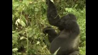 Atlas Safaris Uganda (French)