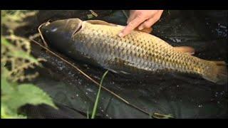 рыбалка в сентябре на сазана видео