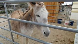 FOREVER HOME DONKEY RESCUE  (This is a great place)