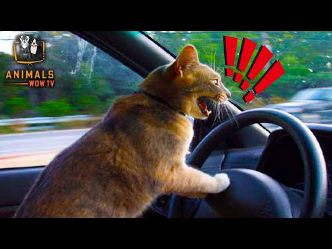 The Meaning Behind 12 Strangest Cat Behaviors | Jaw-Dropping Facts About Cats