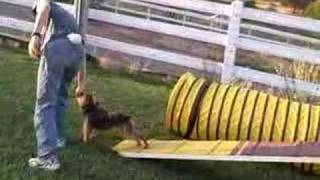 Learning The Agility Dog Walk