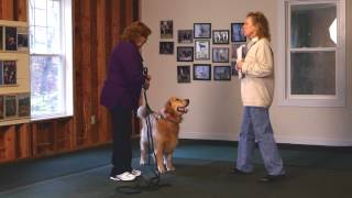 Introduction To Akc Canine Good Citizen Test