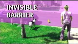 Invisible Barriers- Dog Training