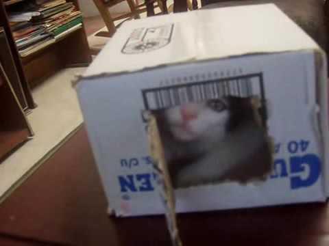 Rap de terro porun gato