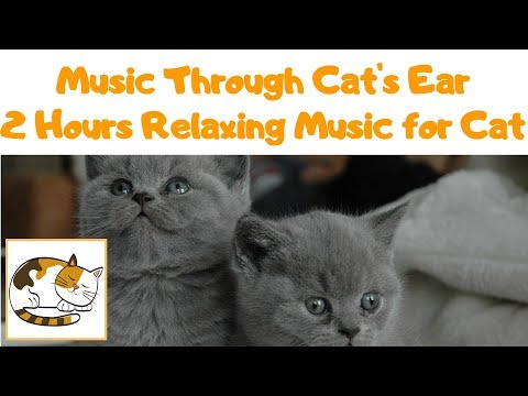 Music Through a Cat's Ear - 2 Hours Relaxing Music for Your Cat