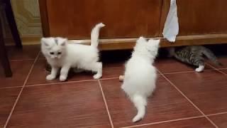 Брошенные котята