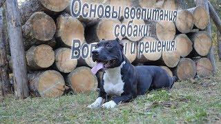 4 основных элемента воспитания собаки. Даня Боб. Основы воспитания собаки.