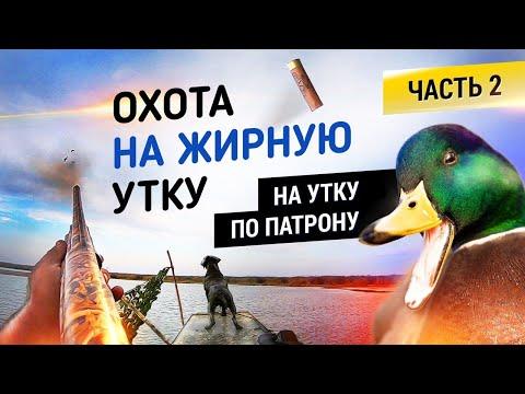 Охота на жирную утку! Часть 2 | На утку по патрону | Duck hunting