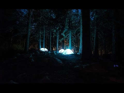 FOREST AT NIGHT - Owls, Crickets, Light Rain, Wind in Trees - Relaxation Study Sleep 🎧 TV RELAX