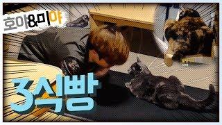 [자동&호야미야] 고양이 앞에서 고양이 자세 취해보기