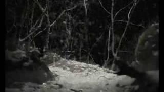 Dj Venom - Liquid Suicide