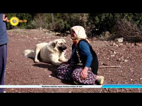 Büyükalan Köyünde Yaşam Kumluca Antalya 4K UHD