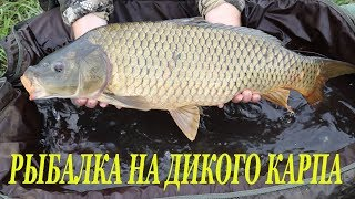 Рыбалка на карпа / Дикий водоем