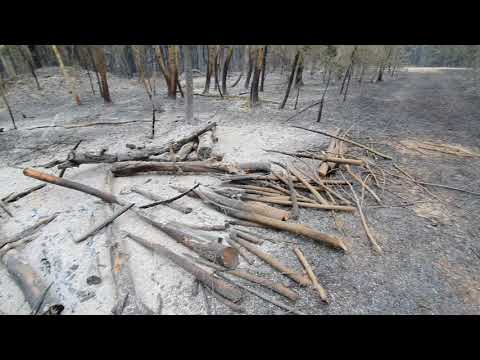 Последствия лесного пожара под Брестом