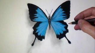 Comment dessiner un Papillon [Tutoriel]