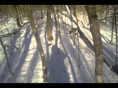Jason's deer hunting adventure