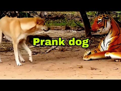 Prank dog & Fake Tiger Vs Dog Prank Video Funny | RoSeak Zin Ep0002