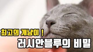 세상에서 제일 깔끔한묘종 & 집고양이 러시안블루의 비밀