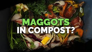 Are Maggots in Your Compost Good or Bad?