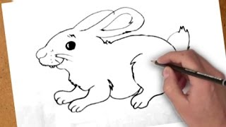Como dibujar un Conejo l How to draw a Rabbit