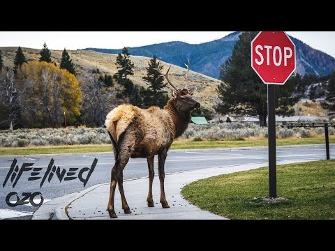 Coolest Things to See in YELLOWSTONE!