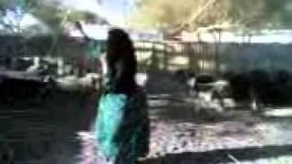 رقص بنات البدو