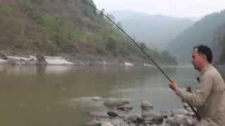 Huge Golden Mahseer Catch in Koshi River Nepal