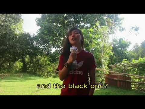 Ang Itim At Puting Kalabaw ( The Black And The White Carabao ) Funny Videos
