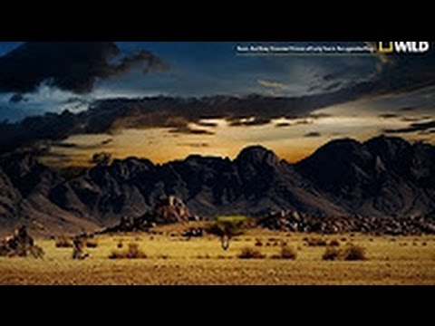Nat Geo Wild   Nature Documentary   Wildlife Animal   Discov