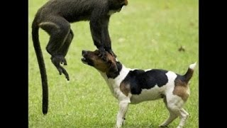 Con khỉ bố láo nhất thế giới - Động vật hài hước