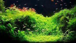 Setting Up A Fish Tank With Live Plants | Aquarium Care