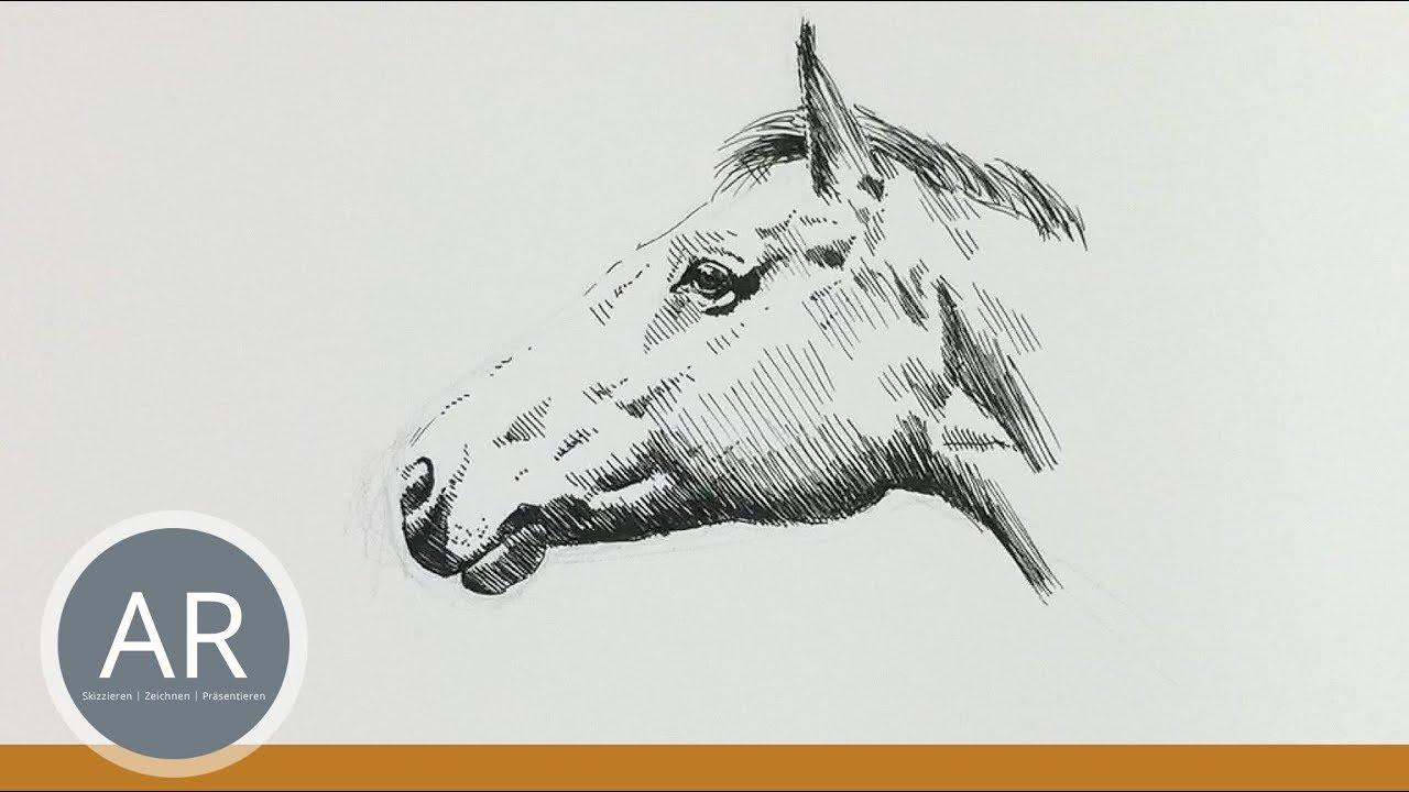 Pferdekopf Zeichnen Pferde Portraits Zeichnen Lernen Mappenvorbereitungskurs Kunst
