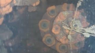 格納容器内の損傷激しく 福島第1原発3号機、 水中ロボで調査