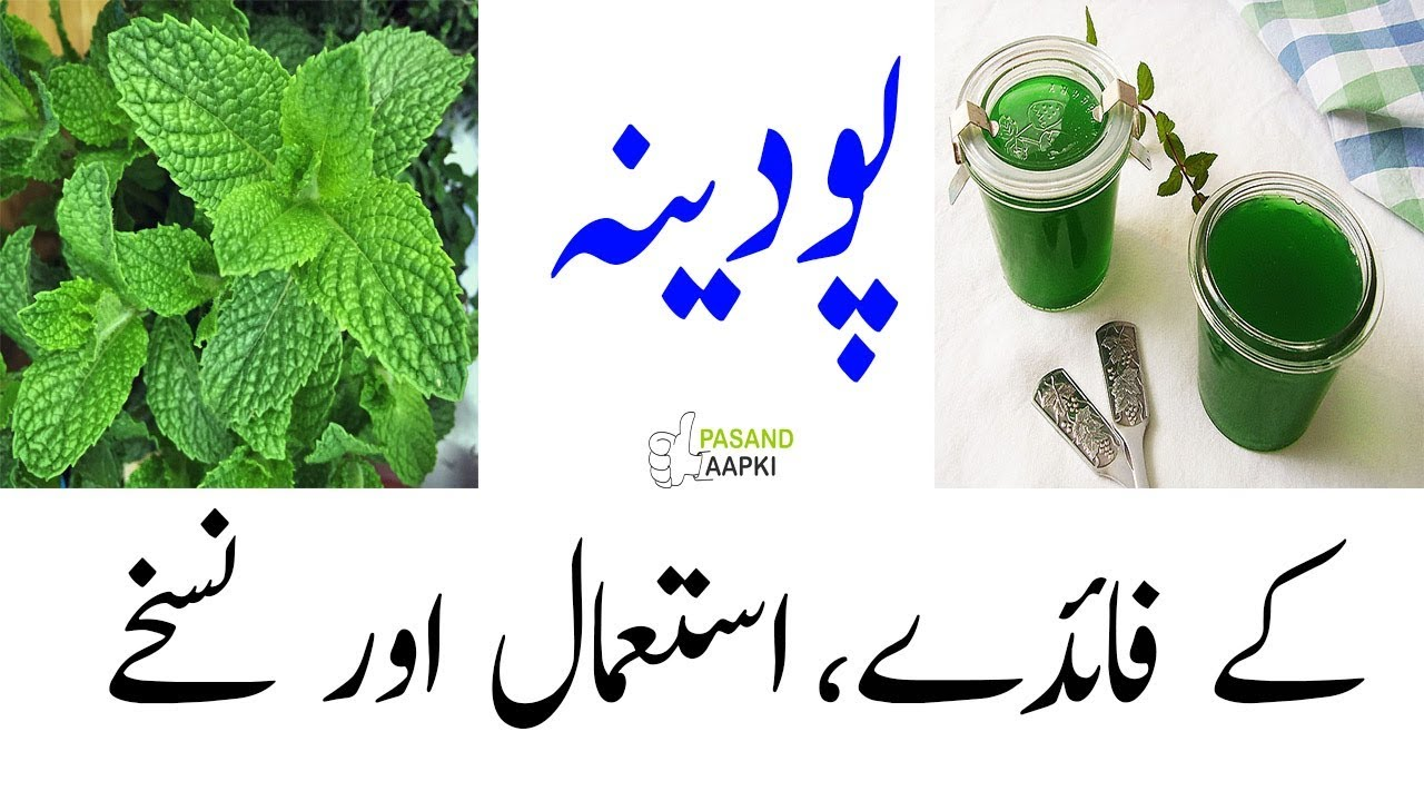 mint : pudina : recipes of full information in urdu with Dr Khurram:Pasand Aapki