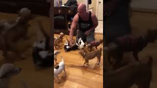 Man Greeted By Gaggle of Happy Chihuahuas