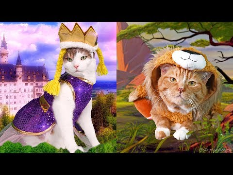 Dressing up my Cats in Holoween Costumes