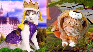 Dressing up my Cats in Holoween Costumes thumbnail