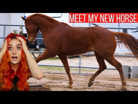 HORSE DNA REVEAL *not What I Was Expecting!