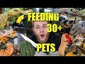 FEEDING ALL MY PETS!! | FEEDING 30+ REPTILES AND AMPHIBIANS