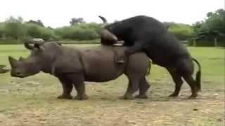 Funny video about animals. Смешное видео про животных.