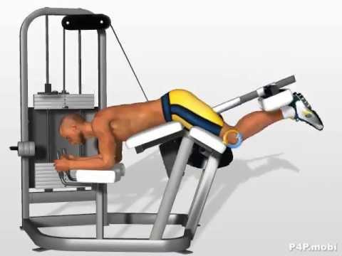 appareil musculation ischio jambier