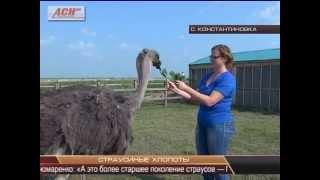 видео Климат Амурской области
