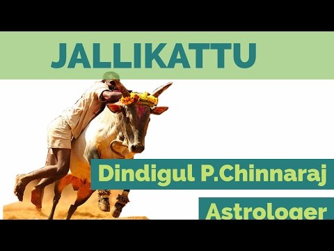 Jallikattu by DINDIGUL P CHINNARAJ ASTROLOGER INDIA
