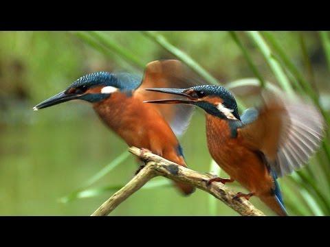 Forelle ausnehmen Trick !из YouTube · Длительность: 3 мин44 с