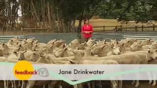 Lifetime Ewe Management (Episode 10)