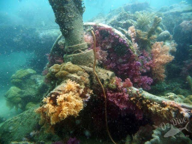 OzDive in Solomon Islands - Diving in Uepi (2015)