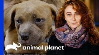 Puppies Caleb & Hannah Take Their First Steps | Pit Bulls & Parolees