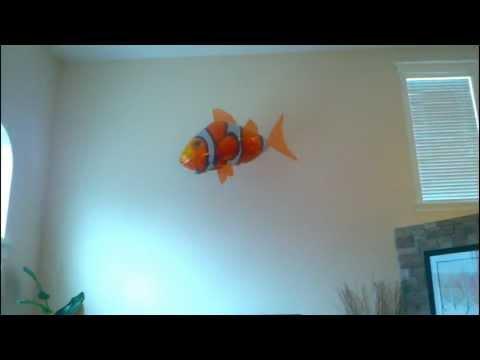 Flying Clown Fish