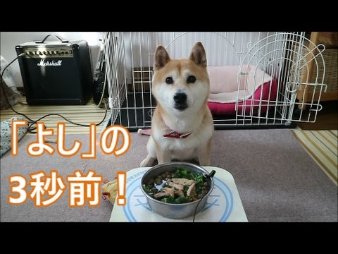 柴犬小春 【ASMR】豚ロースはもちろん飲み物!pork loin 音フェチ・飯テロ