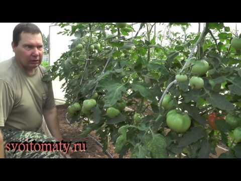 Как правильно обрезать листья на помидорах в теплице видео